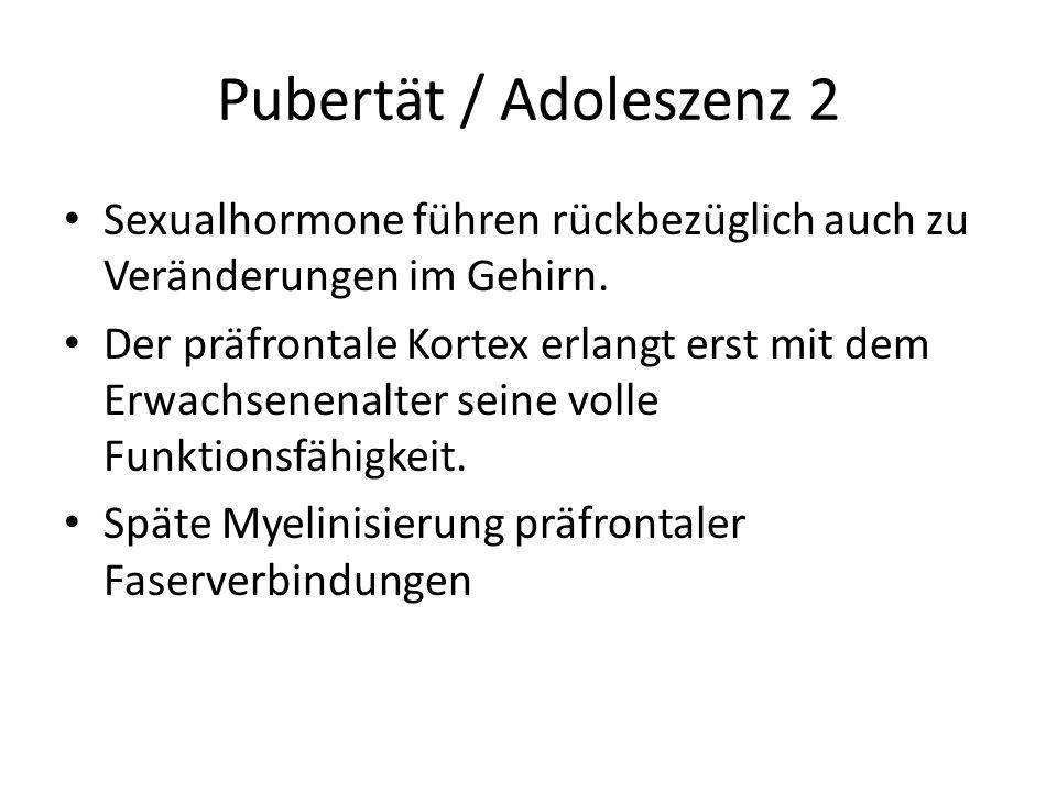 Pubertät / Adoleszenz 2 Sexualhormone führen rückbezüglich auch zu Veränderungen im Gehirn. Der präfrontale Kortex erlangt erst mit dem Erwachsenenalt