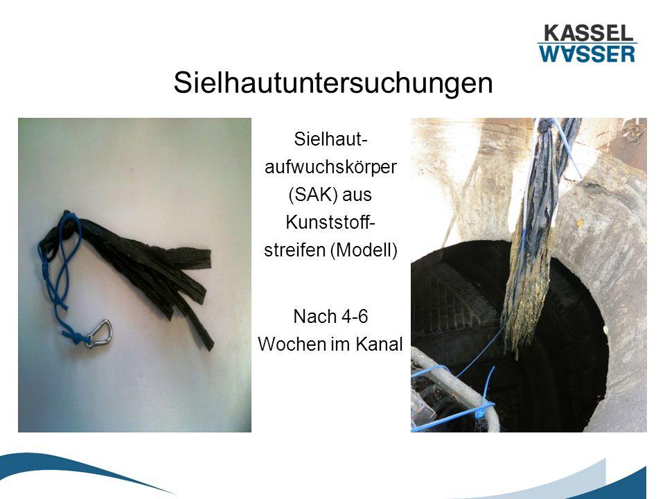Sielhautuntersuchungen Sielhaut- aufwuchskörper (SAK) aus Kunststoff- streifen (Modell) Nach 4-6 Wochen im Kanal