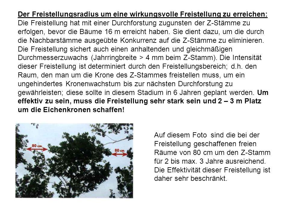 Der Freistellungsradius um eine wirkungsvolle Freistellung zu erreichen: Die Freistellung hat mit einer Durchforstung zugunsten der Z-Stämme zu erfolgen, bevor die Bäume 16 m erreicht haben.