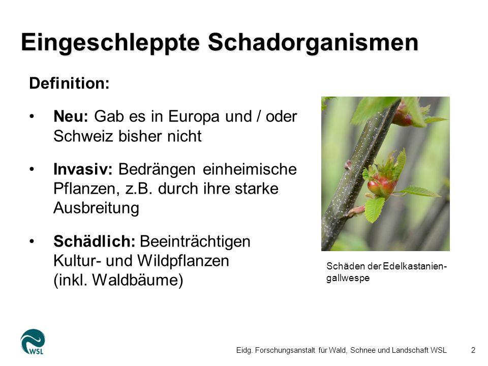 Definition: Neu: Gab es in Europa und / oder Schweiz bisher nicht Invasiv: Bedrängen einheimische Pflanzen, z.B.