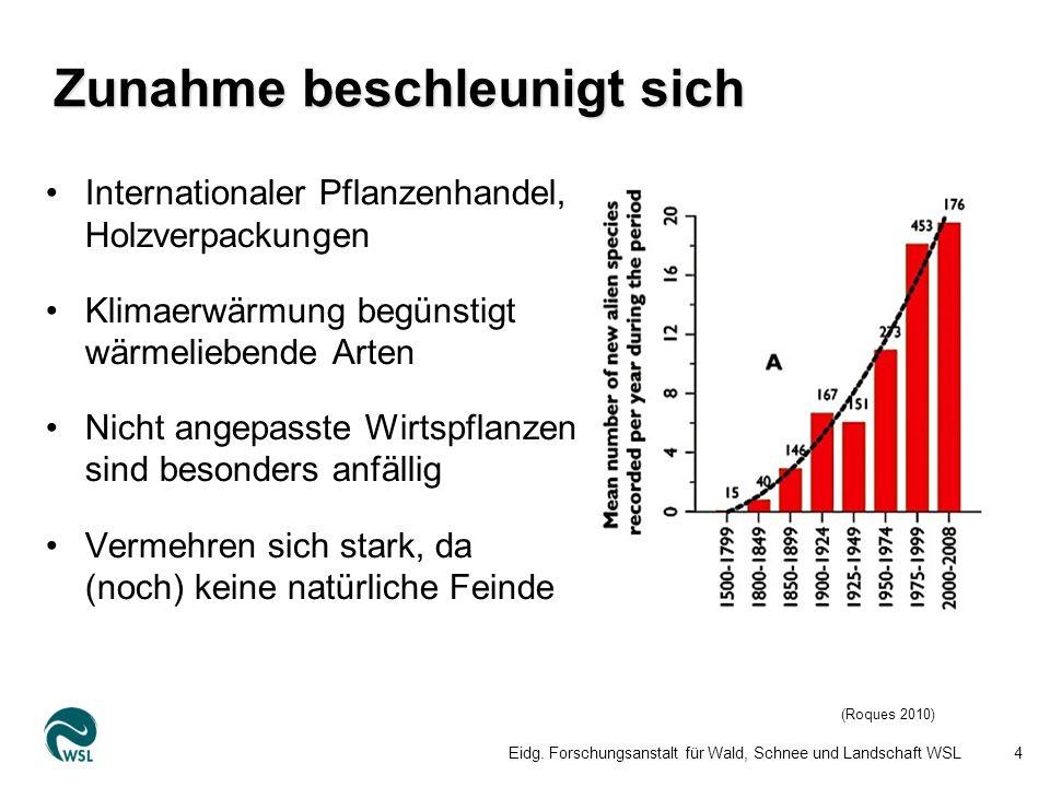 5 Kastanienrindenkrebs (1948) Ulmenwelke (1975) Rosskastanienminiermotte (1998) Buchsbaumzünsler (2007) Eschenwelke (2007) Kastaniengallwespe (2009) Ausbreitung der Eschenwelke Grosses Schadenpotential