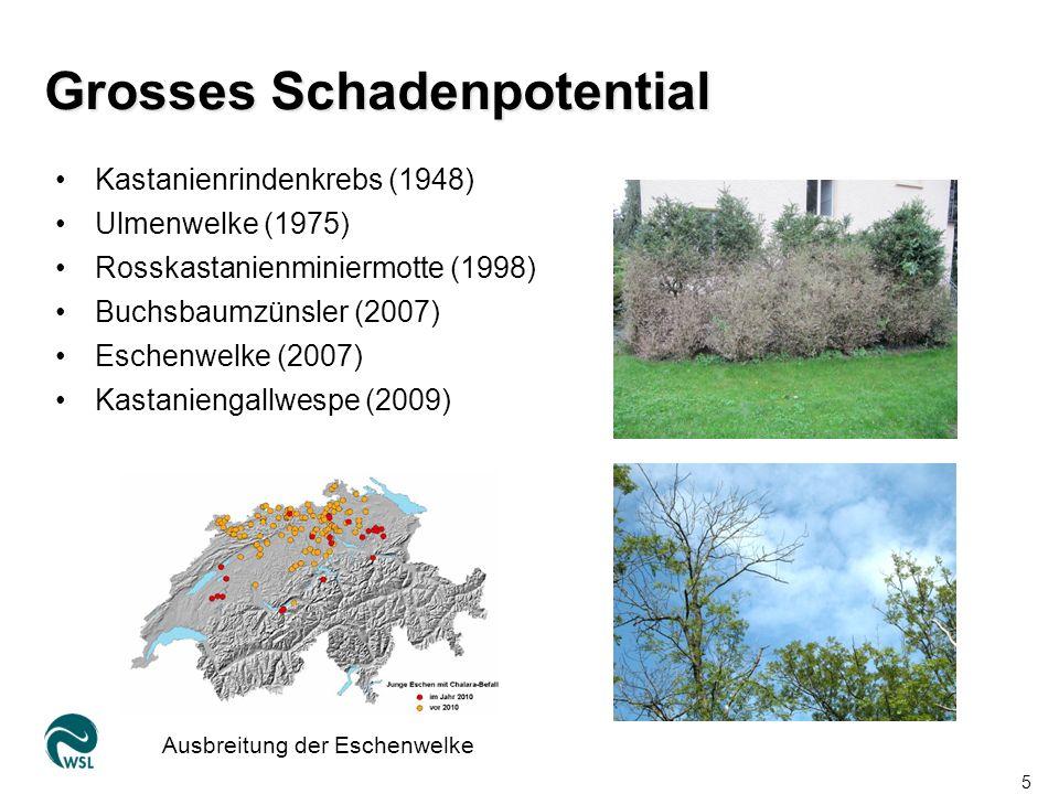 Lage im WSL-Areal Eidg. Forschungsanstalt für Wald, Schnee und Landschaft WSL16