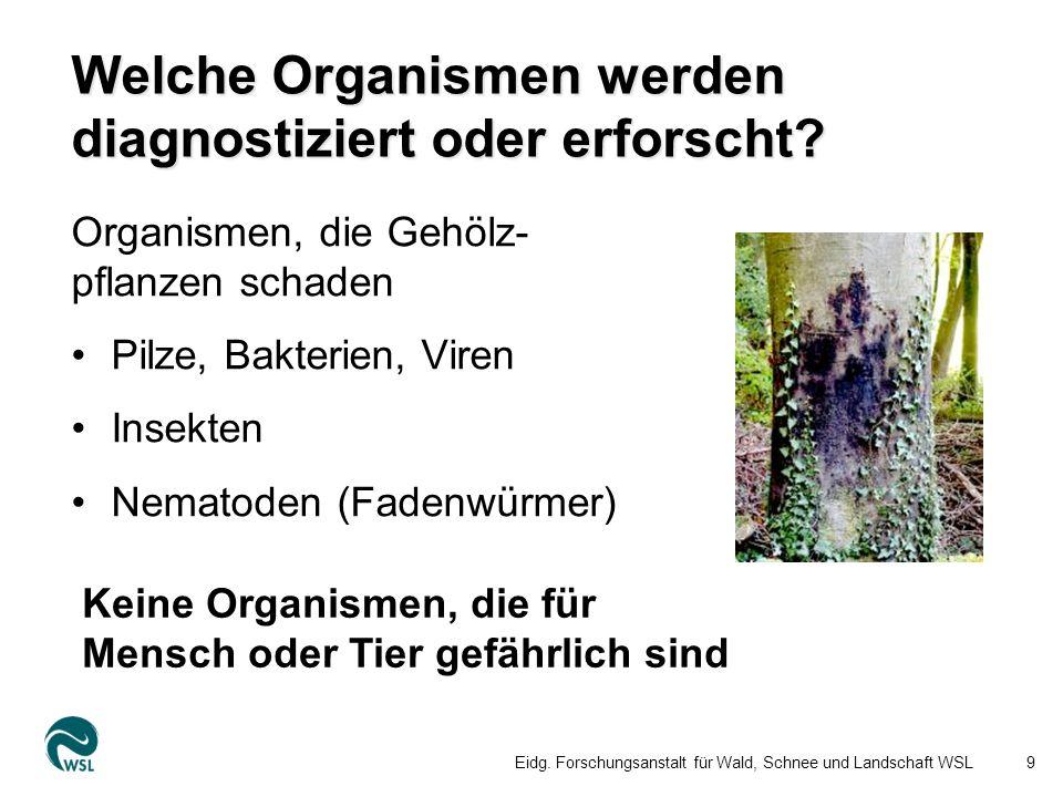 Welche Organismen werden diagnostiziert oder erforscht.