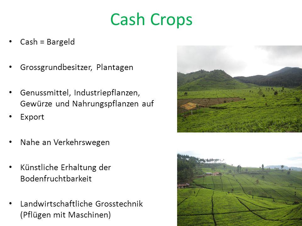 Cash Crops Cash = Bargeld Grossgrundbesitzer, Plantagen Genussmittel, Industriepflanzen, Gewürze und Nahrungspflanzen auf Export Nahe an Verkehrswegen Künstliche Erhaltung der Bodenfruchtbarkeit Landwirtschaftliche Grosstechnik (Pflügen mit Maschinen)