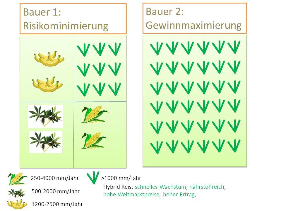 Bauer 1: Risikominimierung Hybrid Reis: schnelles Wachstum, nährstoffreich, hohe Weltmarktpreise, hoher Ertrag, 250-4000 mm/Jahr 500-2000 mm/Jahr 1200-2500 mm/Jahr >1000 mm/Jahr Bauer 2: Gewinnmaximierung