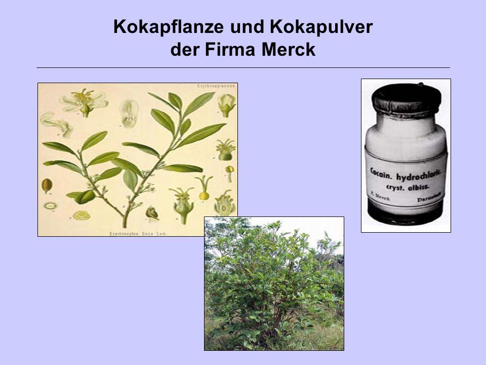 Kokapflanze und Kokapulver der Firma Merck