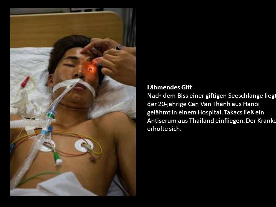 Lähmendes Gift Nach dem Biss einer giftigen Seeschlange liegt der 20-jährige Can Van Thanh aus Hanoi gelähmt in einem Hospital.