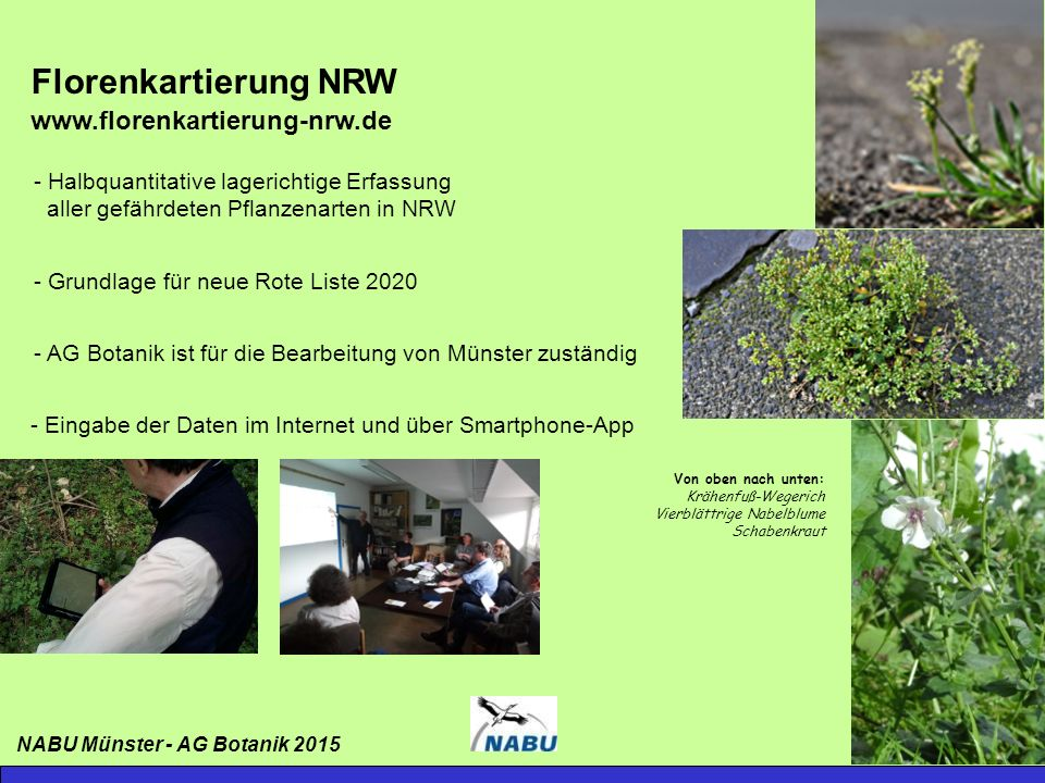 Wildkräuter-Kochgruppe Leitung: Ann-Kathrin (Kati) Will NABU Münster - AG Botanik 2015 Erste Treffen bei Kati zu Hause, auf Dauer auf Haus Heidhorn geplant Interessenten melden sich bei Kati unter ann-kathrinwill@gmx.de