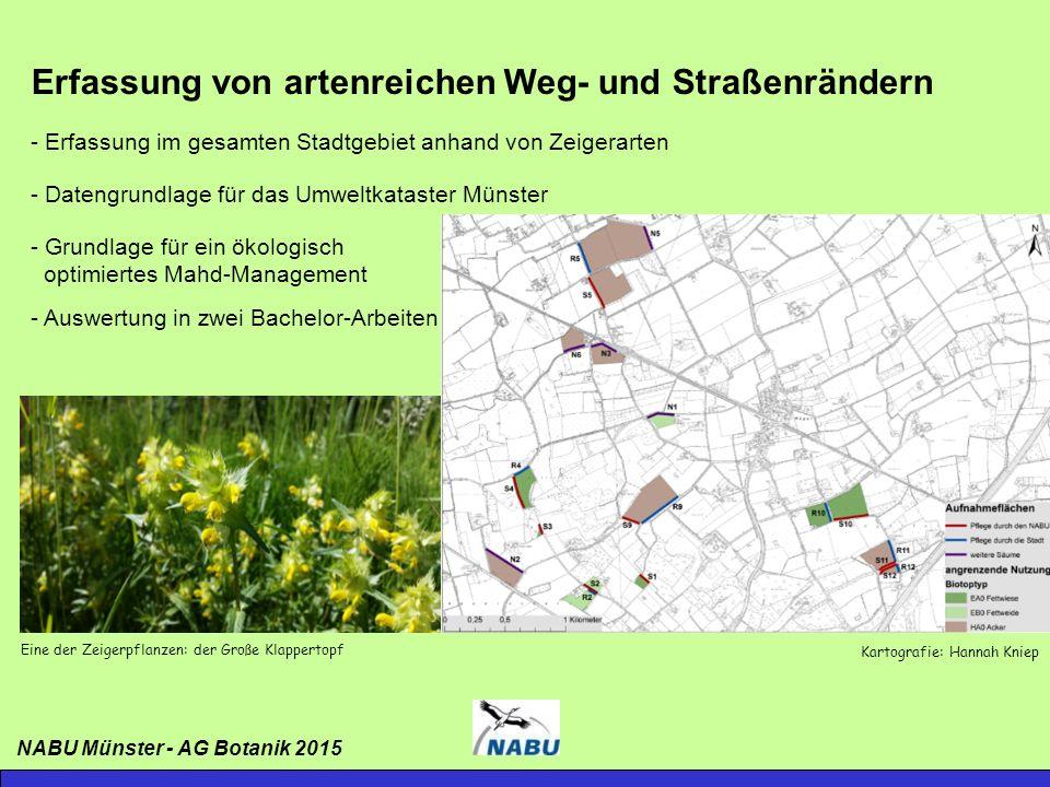 Erfassung von artenreichen Weg- und Straßenrändern NABU Münster - AG Botanik 2015 Kartografie: Selina Paczkowski artenreiche Säume: 51,2 km mesophil: 36,0 km Saure Standorte: 12,5 km Kalk: 2,7 km
