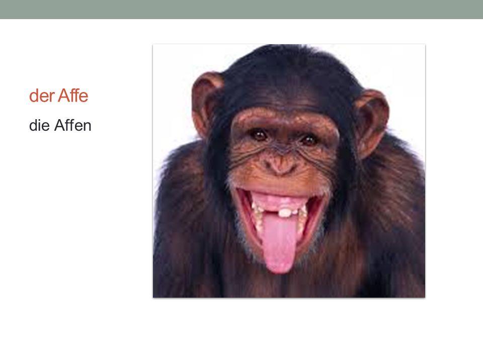 der Affe die Affen