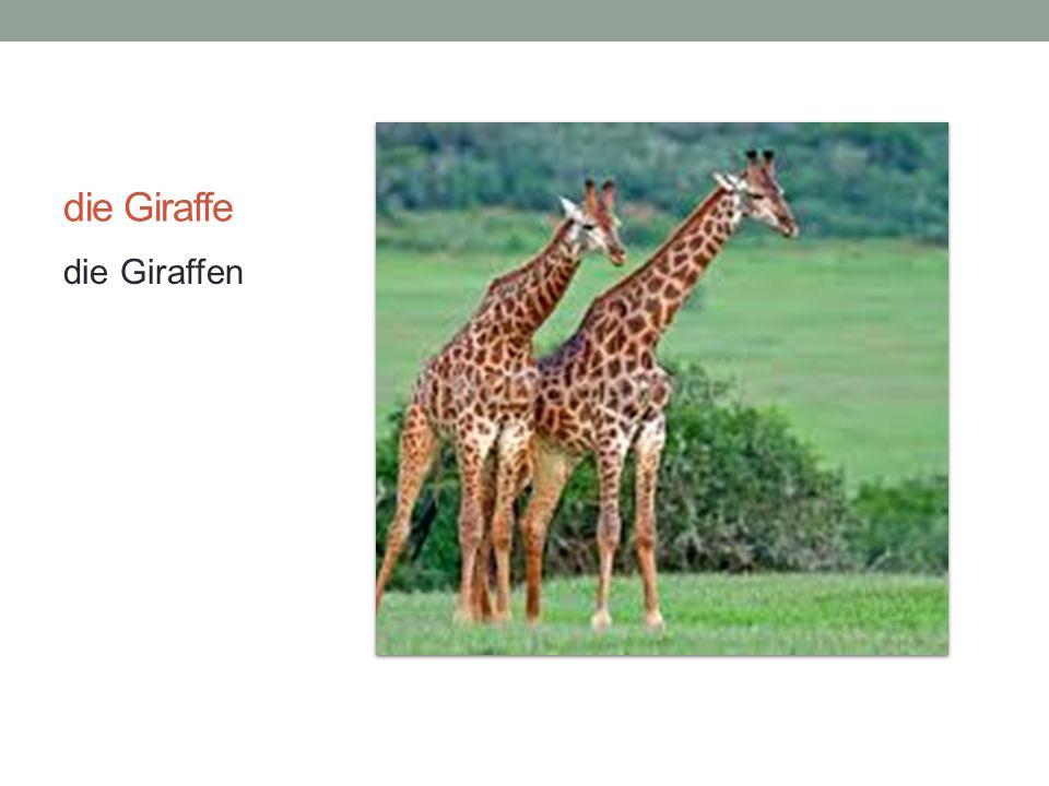 die Giraffe die Giraffen