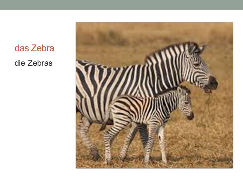 das Zebra die Zebras