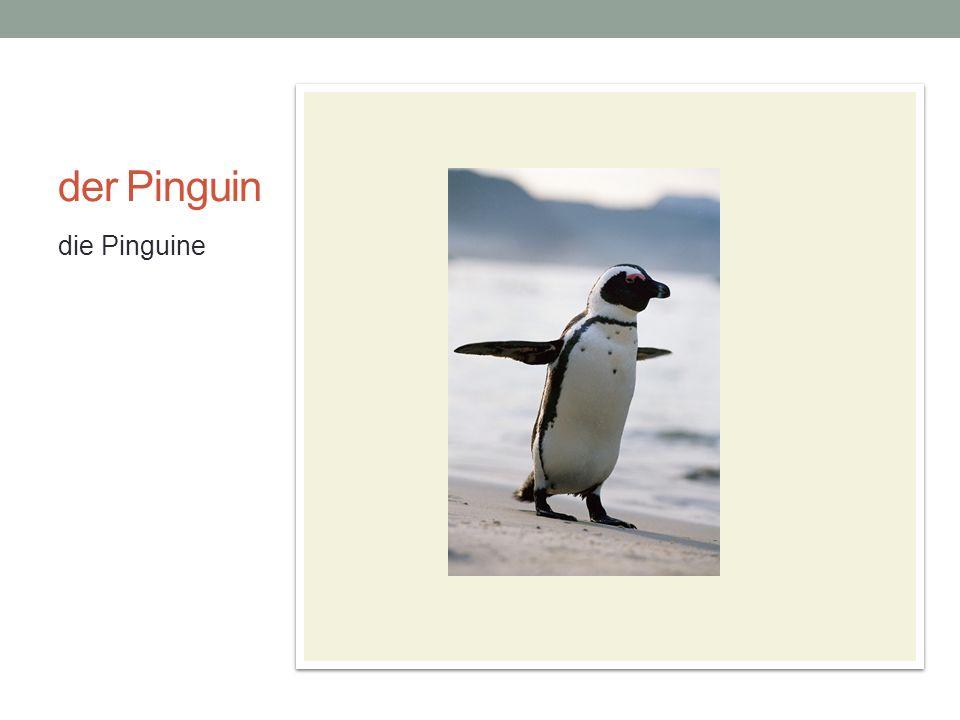 der Pinguin die Pinguine