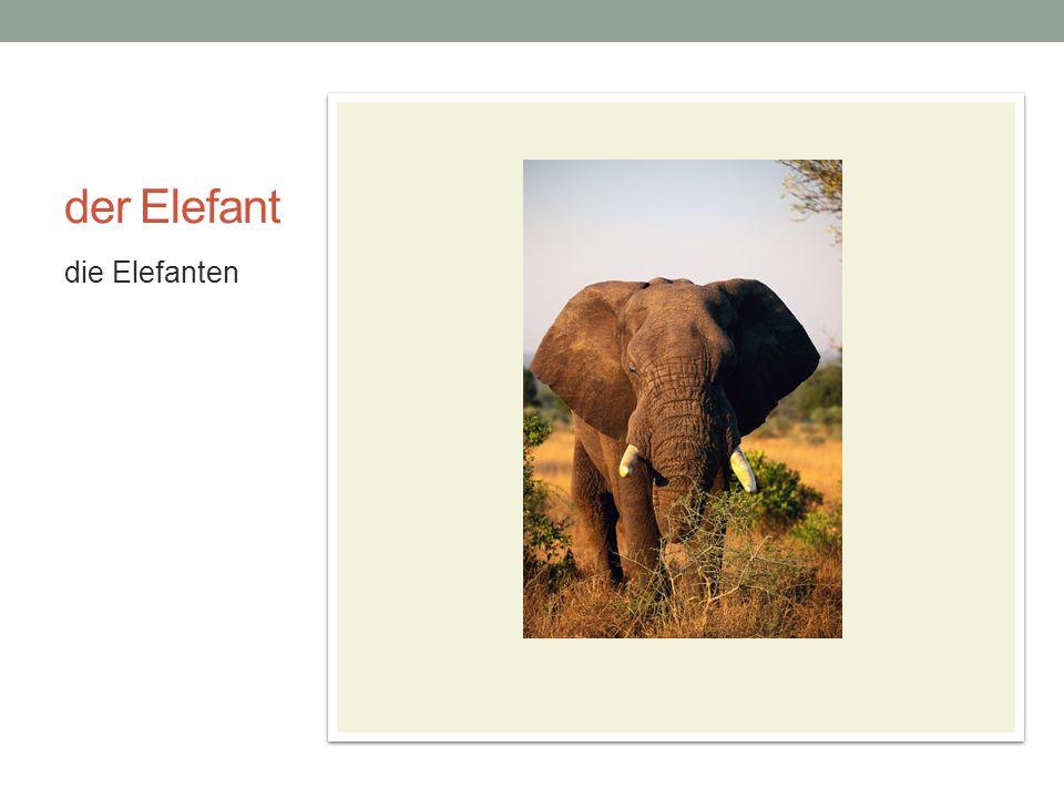 der Elefant die Elefanten