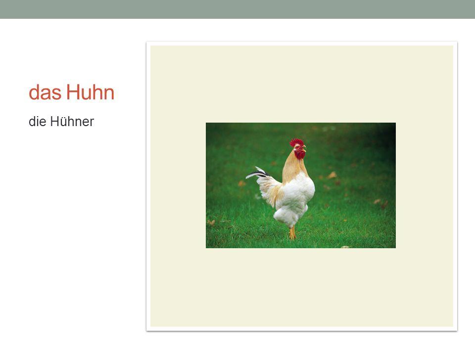 das Huhn die Hühner