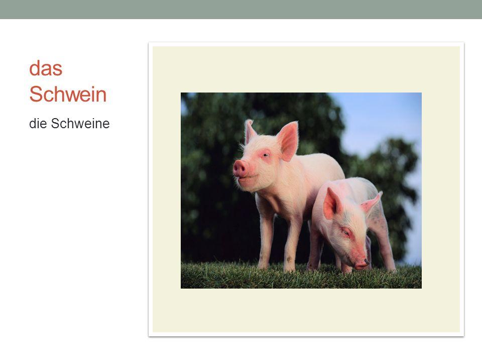 das Schwein die Schweine