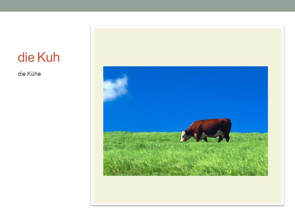 die Kuh die Kühe