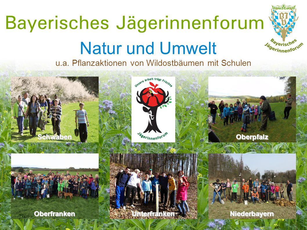 Natur und Umwelt Niederbayern OberpfalzSchwaben Oberfranken u.a. Pflanzaktionen von Wildostbäumen mit Schulen Unterfranken
