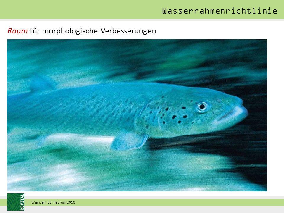 Wien, am 23. Februar 2010 Wasserrahmenrichtlinie Raum für morphologische Verbesserungen