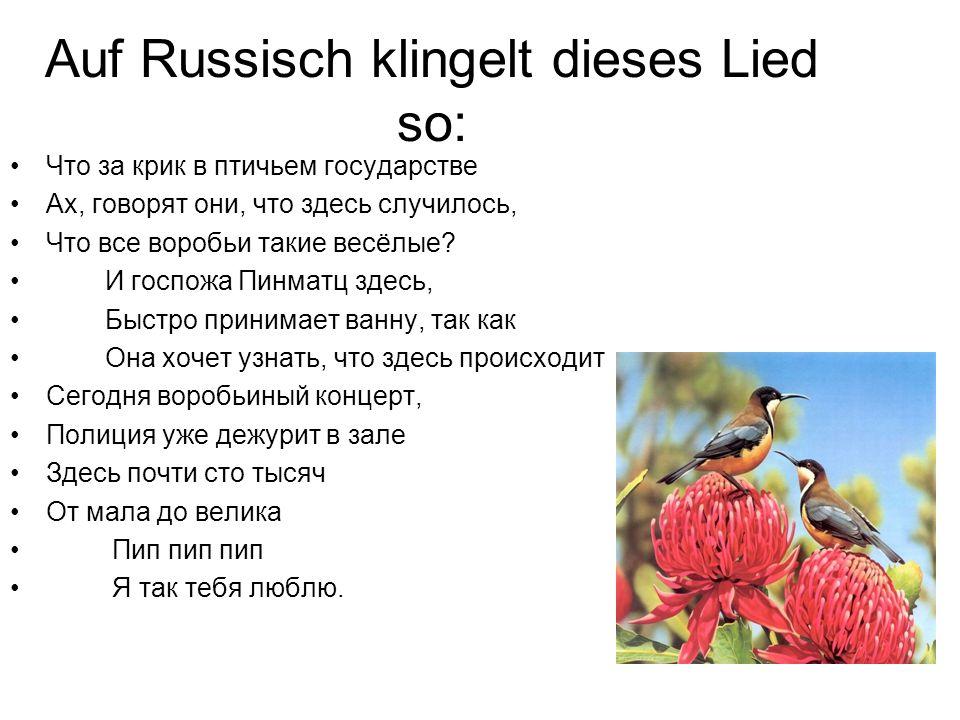 Auf Russisch klingelt dieses Lied so: Что за крик в птичьем государстве Ах, говорят они, что здесь случилось, Что все воробьи такие весёлые.