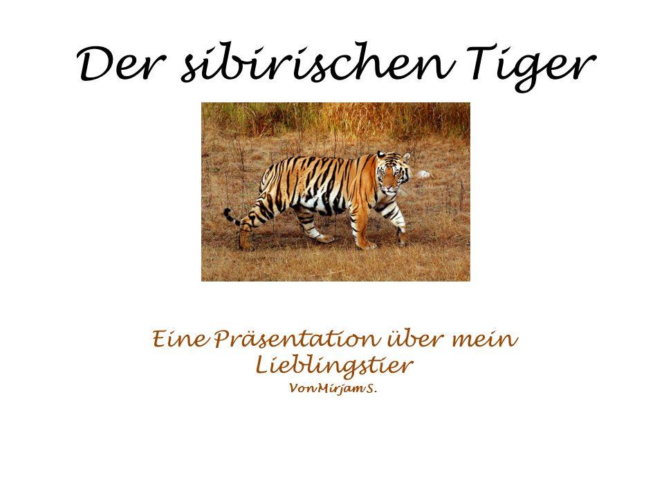 Der sibirischen Tiger Eine Präsentation über mein Lieblingstier Von Mirjam S.