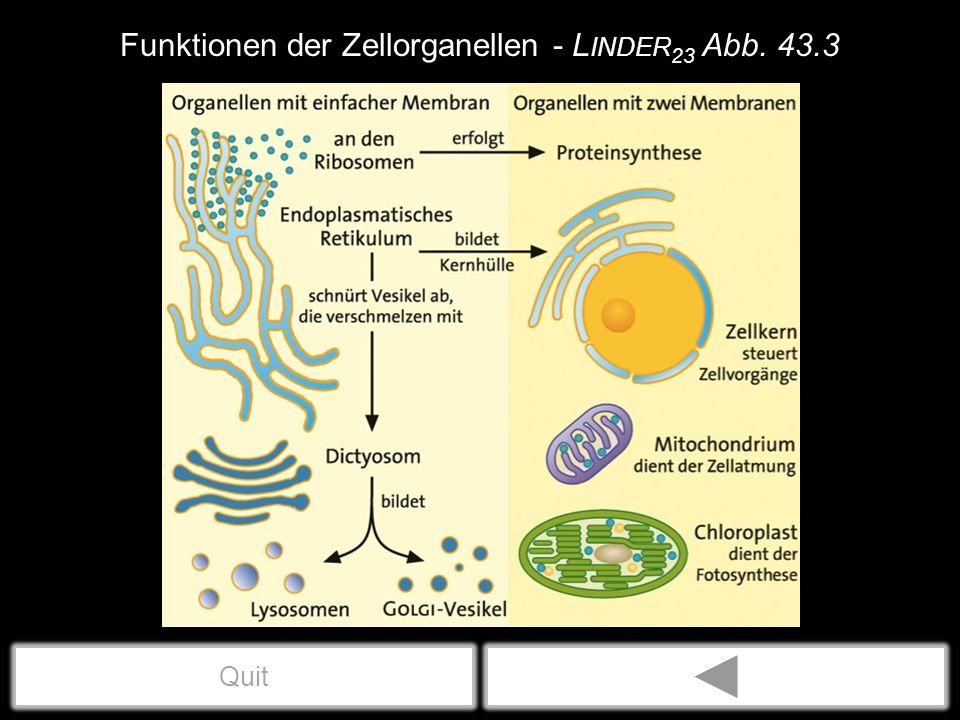 Funktionen der Zellorganellen - L INDER 23 Abb. 43.3 Quit
