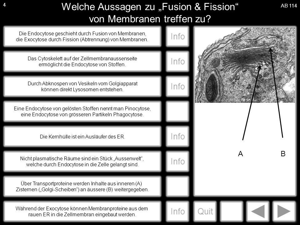 """a Welche Aussagen zu """"Fusion & Fission von Membranen treffen zu."""