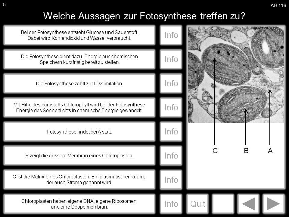 a Welche Aussagen zur Fotosynthese treffen zu.