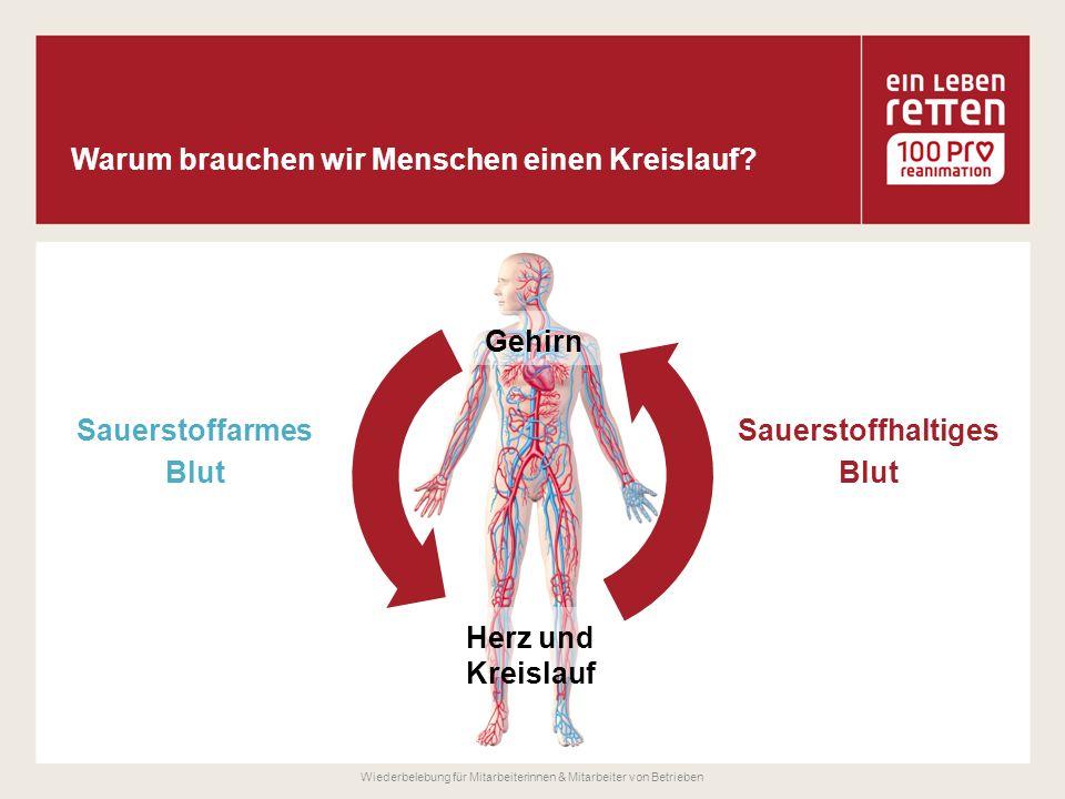 Gehirn Herz und Kreislauf Sauerstoffarmes Blut Sauerstoffhaltiges Blut Wiederbelebung für Mitarbeiterinnen & Mitarbeiter von Betrieben