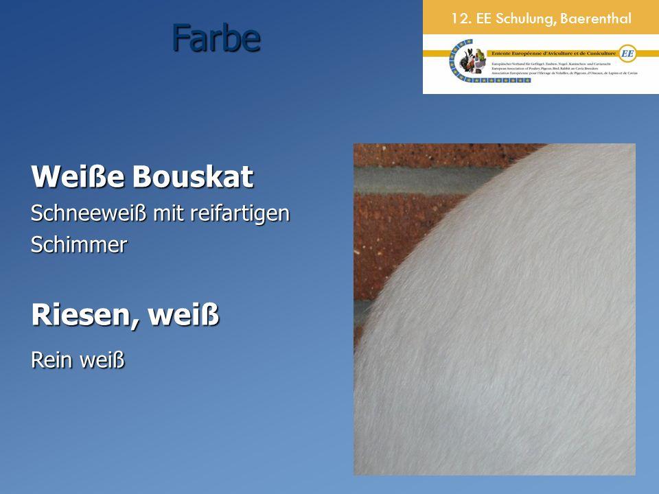 12. EE Schulung, BaerenthalFarbe Weiße Bouskat Schneeweiß mit reifartigen Schimmer Riesen, weiß Rein weiß