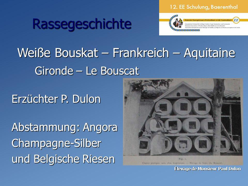 Weiße Bouskat – Frankreich – Aquitaine Gironde – Le Bouscat Gironde – Le Bouscat Erzüchter P.