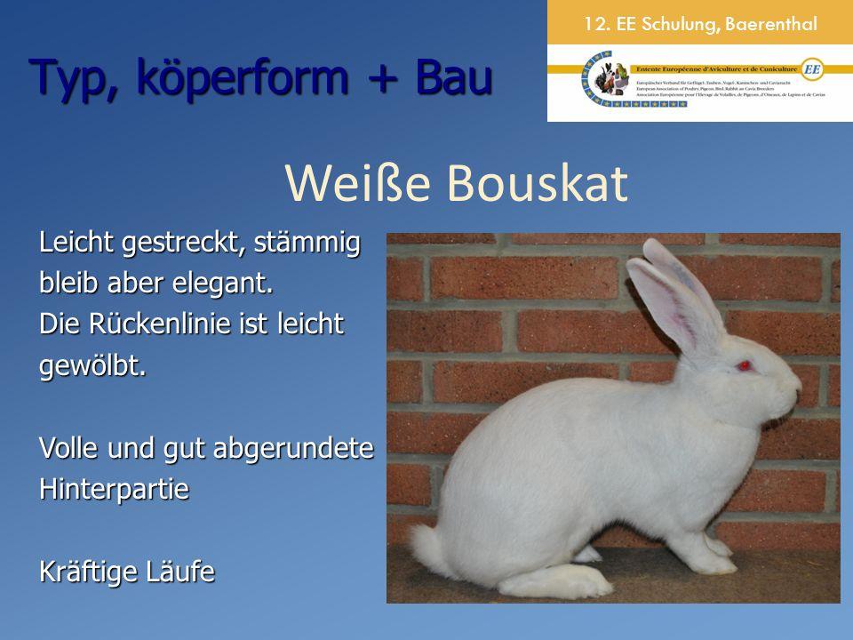 12. EE Schulung, Baerenthal Weiße Bouskat Leicht gestreckt, stämmig bleib aber elegant.
