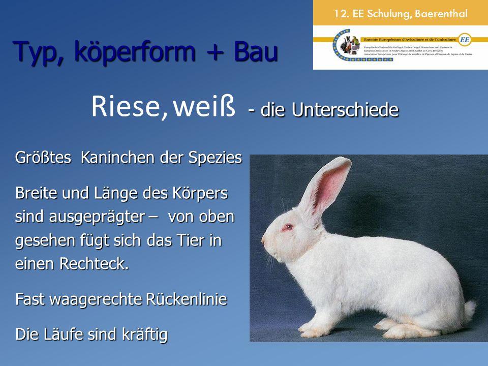 12. EE Schulung, Baerenthal - die Unterschiede Riese, weiß - die Unterschiede Größtes Kaninchen der Spezies Breite und Länge des Körpers sind ausgeprä
