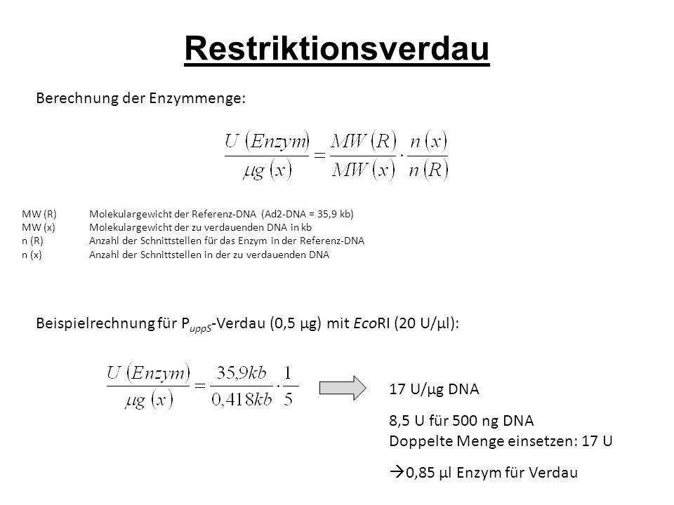 Restriktionsverdau Berechnung der Enzymmenge: MW (R)Molekulargewicht der Referenz-DNA (Ad2-DNA = 35,9 kb) MW (x)Molekulargewicht der zu verdauenden DNA in kb n (R)Anzahl der Schnittstellen für das Enzym in der Referenz-DNA n (x) Anzahl der Schnittstellen in der zu verdauenden DNA Beispielrechnung für P uppS -Verdau (0,5 µg) mit EcoRI (20 U/µl): 17 U/µg DNA 8,5 U für 500 ng DNA Doppelte Menge einsetzen: 17 U  0,85 µl Enzym für Verdau
