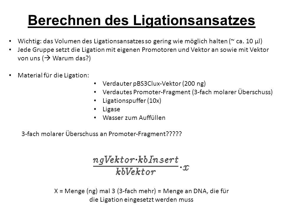 Berechnen des Ligationsansatzes Wichtig: das Volumen des Ligationsansatzes so gering wie möglich halten (~ ca.