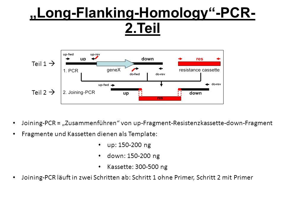 """""""Long-Flanking-Homology -PCR- 2.Teil Teil 1  Teil 2  Joining-PCR = """"Zusammenführen von up-Fragment-Resistenzkassette-down-Fragment Fragmente und Kassetten dienen als Template: up: 150-200 ng down: 150-200 ng Kassette: 300-500 ng Joining-PCR läuft in zwei Schritten ab: Schritt 1 ohne Primer, Schritt 2 mit Primer"""
