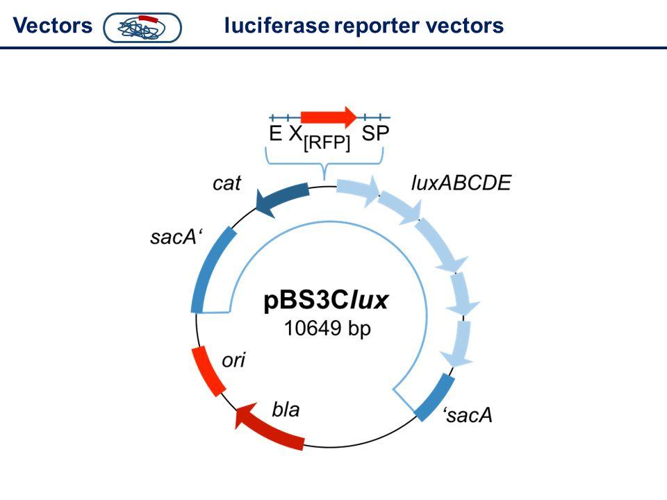 Vectorsluciferase reporter vectors