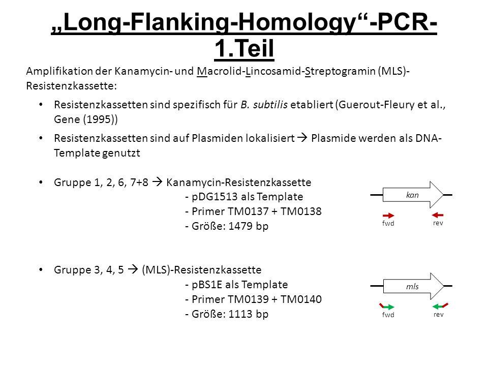"""Long-Flanking-Homology -PCR- 1.Teil Amplifikation der Kanamycin- und Macrolid-Lincosamid-Streptogramin (MLS)- Resistenzkassette: Resistenzkassetten sind spezifisch für B."