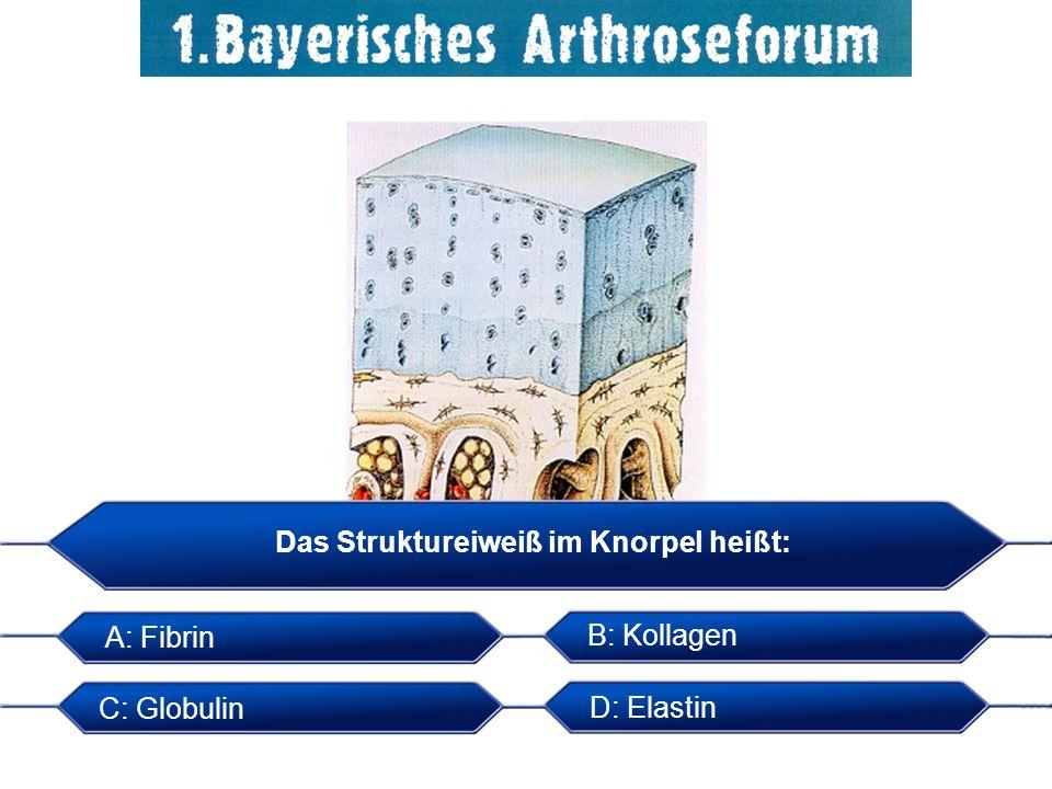 Das Struktureiweiß im Knorpel heißt: A: Fibrin B: Kollagen C: Globulin D: Elastin