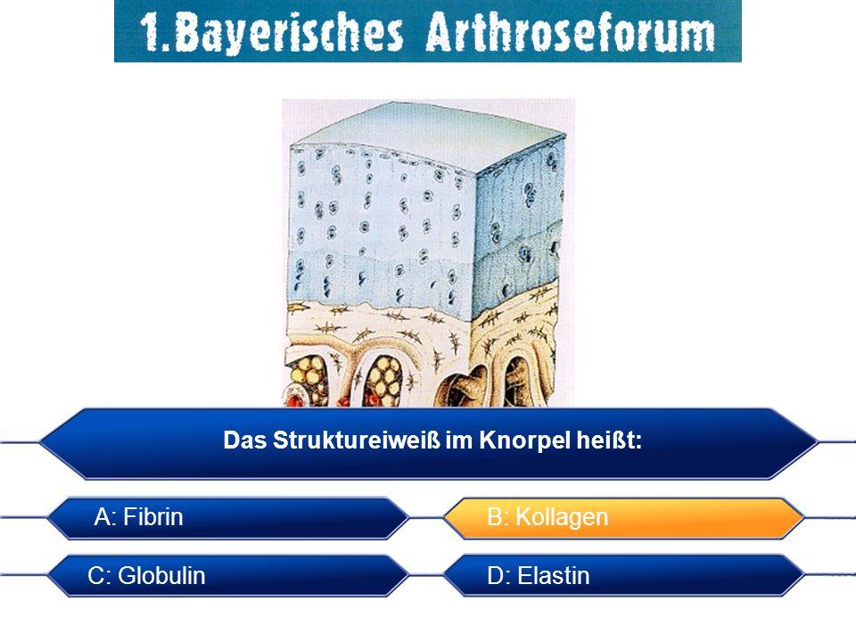 Das Struktureiweiß im Knorpel heißt: A: Fibrin B: Kollagen C: Globulin D: Elastin Das Struktureiweiß im Knorpel heißt: B: Kollagen C: Globulin A: Fibr