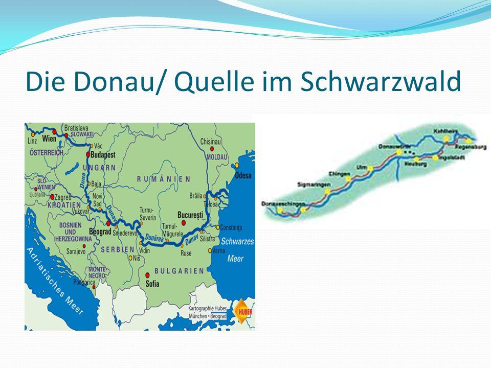 Die Donau/ Quelle im Schwarzwald