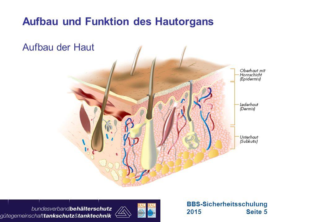 Maschinen in Europa Vorschriften-Übersicht für Maschinen … zum Beispiel  Bakterien  Pilze  Viren  Parasiten Biologische Gefährdungen Hautgefährdungen BBS-Sicherheitsschulung 2015Seite 16