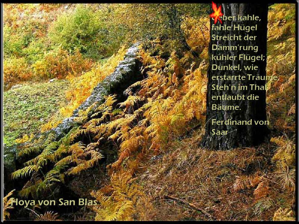 Hoya von San Blas