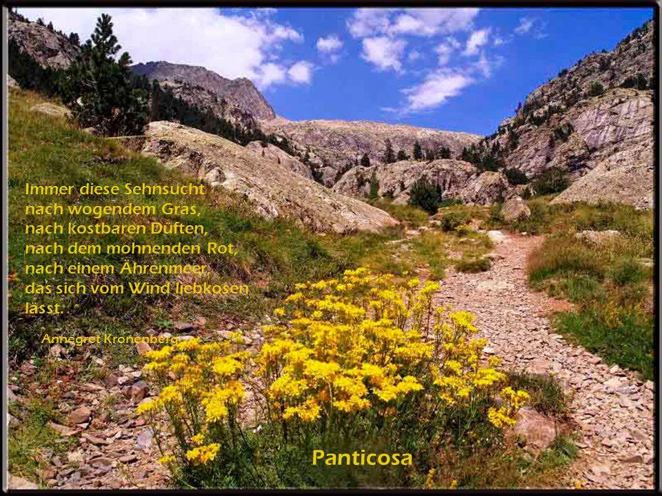 In der Coruña (Staubwedeln) Es ist ein linder Frühlingshauch heut übers Feld gegangen, und nun will Wiese, Baum und Strauch in tausend Blüten prangen.