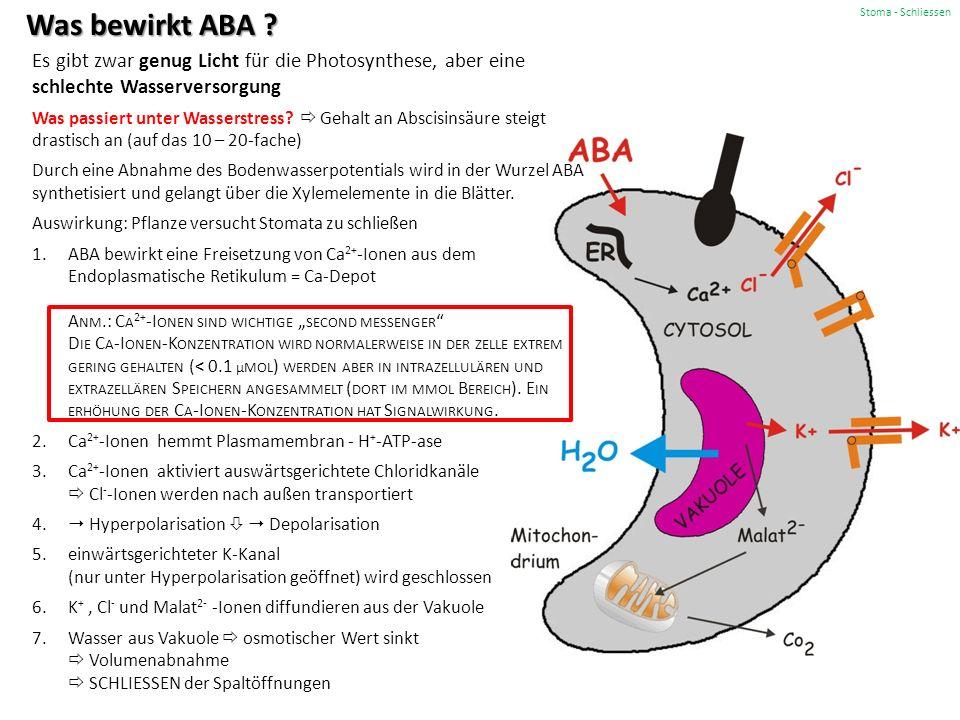 Stoma - Schliessen Was bewirkt ABA .