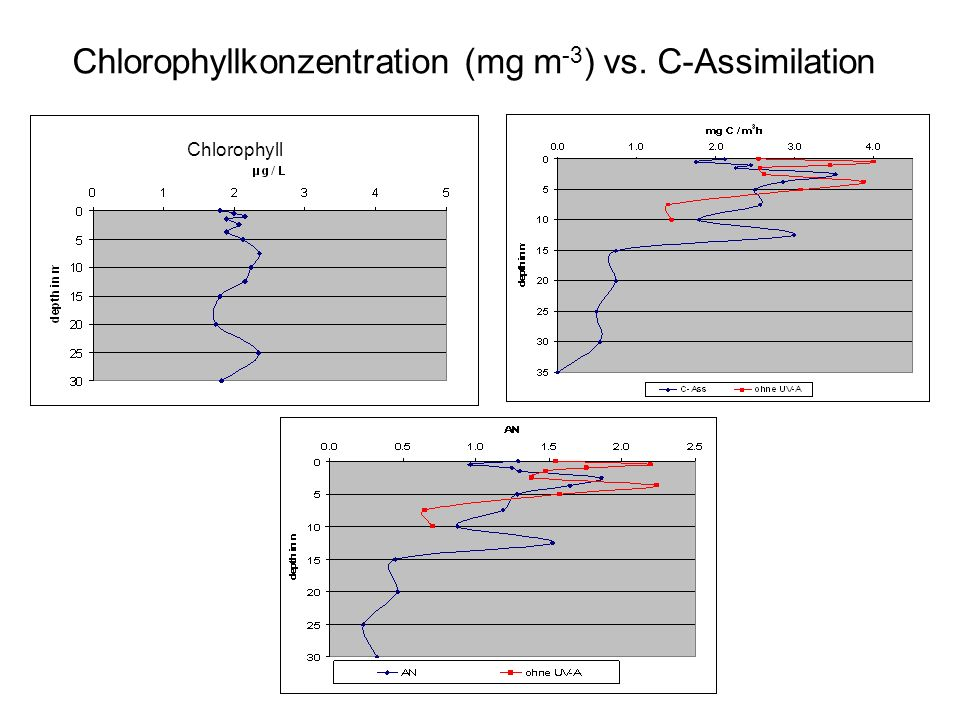 Chlorophyllkonzentration (mg m -3 ) vs. C-Assimilation Chlorophyll