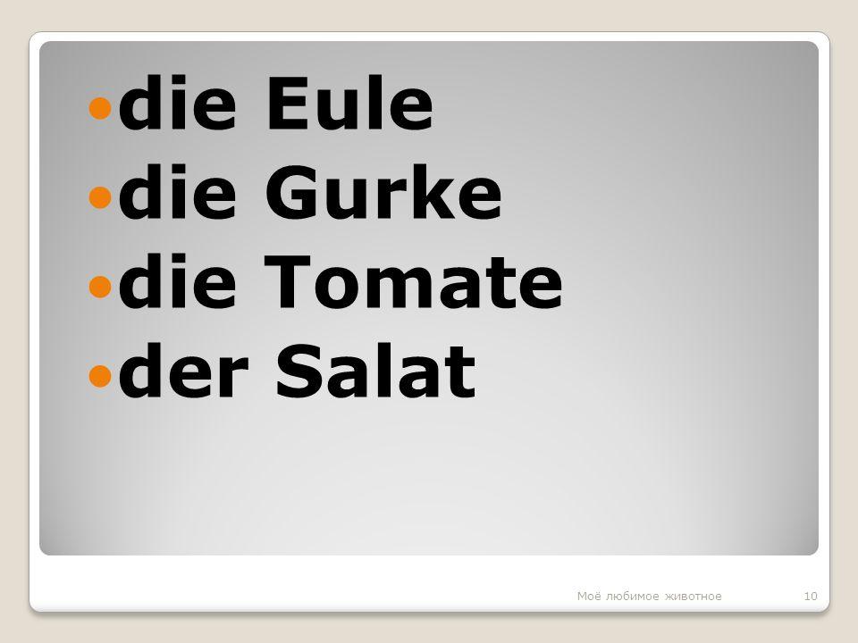 die Eule die Gurke die Tomate der Salat 10Моё любимое животное