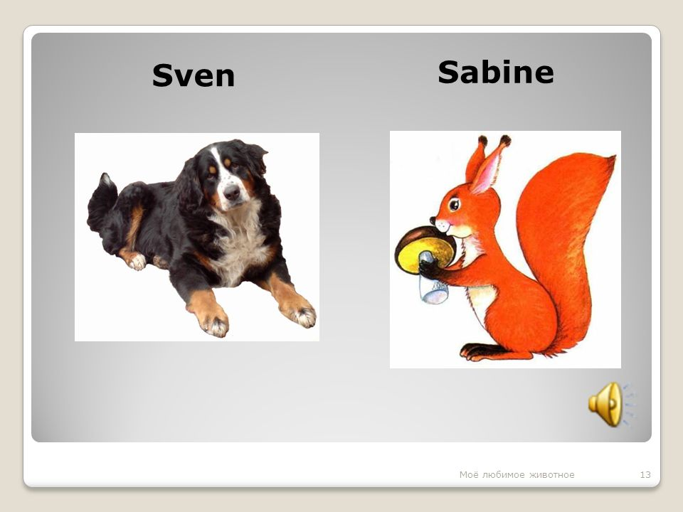 Sven Sabine 13Моё любимое животное