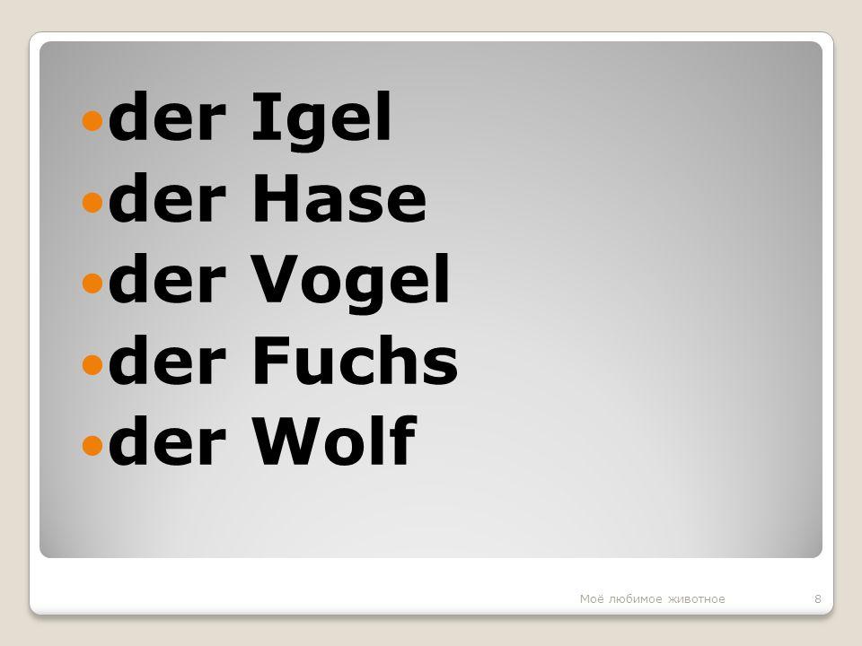 der Igel der Hase der Vogel der Fuchs der Wolf 8Моё любимое животное