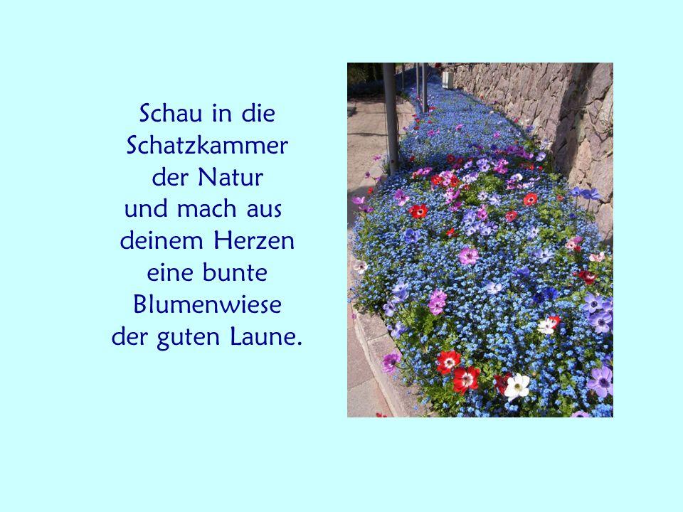 Schau in die Schatzkammer der Natur und mach aus deinem Herzen eine bunte Blumenwiese der guten Laune.